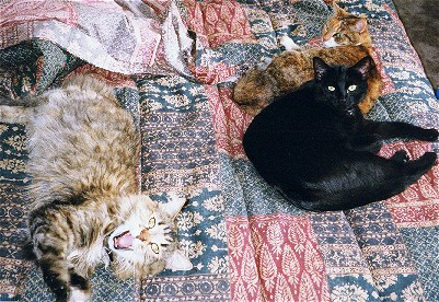 Kitties.jpg (70247 bytes)